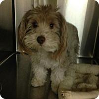 Adopt A Pet :: Rocco - Wyoming, MI