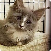 Adopt A Pet :: Cupcake - Walworth, NY