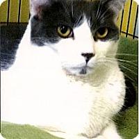 Adopt A Pet :: Tuffy - Medway, MA