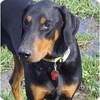 Adopt A Pet :: Alex--adopted!! - New Richmond, OH