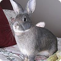Adopt A Pet :: Merlin - North Gower, ON