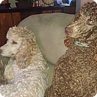 Adopt A Pet :: Keenan ADOPTED!! - moscow mills, MO