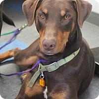 Adopt A Pet :: Boy - Tracy, CA