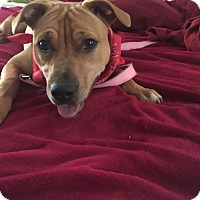 Adopt A Pet :: Crystal - Tallahassee, FL