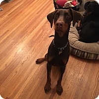 Adopt A Pet :: Sonic - Bellingham, WA