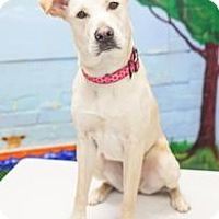 Adopt A Pet :: Lizzie - Bellbrook, OH