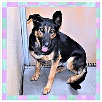 Adopt A Pet :: Jade - San Jacinto, CA