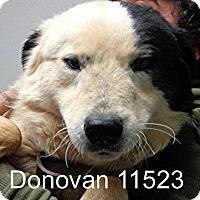 Adopt A Pet :: Donovan - Alexandria, VA