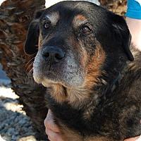 Adopt A Pet :: Trudy - Las Vegas, NV