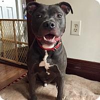 Adopt A Pet :: DJ - Kewanee, IL