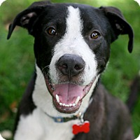 Adopt A Pet :: Come fly with HAWK! - Studio City, CA