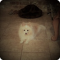 Adopt A Pet :: paquito - conroe, TX