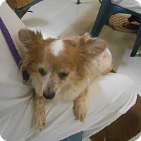 Adopt A Pet :: Mikki Blue - Lockhart, TX