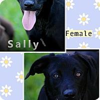 Adopt A Pet :: Sally meet me 5/19 - Manchester, CT