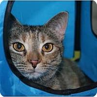 Adopt A Pet :: Twinkle - Cincinnati, OH