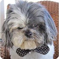 Adopt A Pet :: Herbie-VA - Suffolk, VA