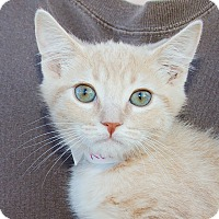 Adopt A Pet :: Keegan - Irvine, CA