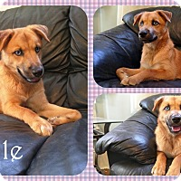 Adopt A Pet :: Giselle - DOVER, OH