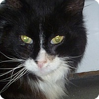 Adopt A Pet :: Uriah - Hamburg, NY
