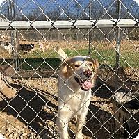 Adopt A Pet :: Buddy - Parker, KS