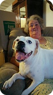 Boxer/American Bulldog Mix Dog for adoption in Charlotte, North Carolina - Daisy Mae
