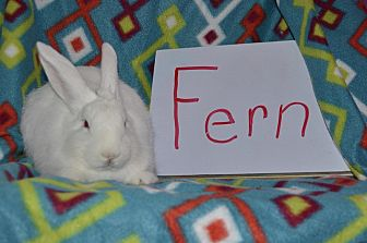 American for adoption in Erie, Pennsylvania - Fern