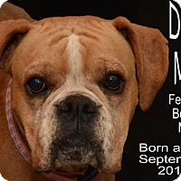 Adopt A Pet :: Daisy Mae - Richmond, MO