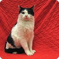 Adopt A Pet :: Stuart - Redwood Falls, MN