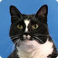 Adopt A Pet :: Veronica - Overland Park, KS