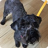Adopt A Pet :: Cooper - Redondo Beach, CA