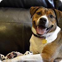 Adopt A Pet :: Malone - Germantown, TN