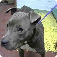 Adopt A Pet :: KYMBER - Atlanta, GA