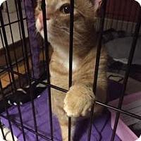 Adopt A Pet :: Range *Courtesy Post* - New York, NY