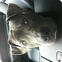 Adopt A Pet :: Willis - Orlando, FL