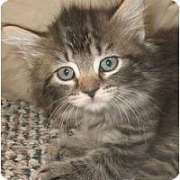Adopt A Pet :: Chablis - Acme, PA
