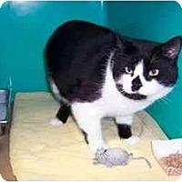 Adopt A Pet :: Jimmy - Secaucus, NJ