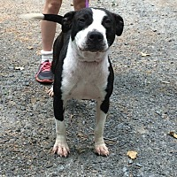 Adopt A Pet :: Monique - Asheboro, NC