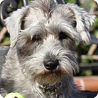 Adopt A Pet :: Rascal - La Costa, CA