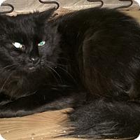 Adopt A Pet :: Ernie - Smyrna, GA