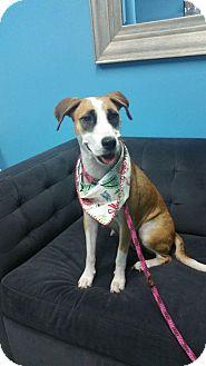 Hound (Unknown Type) Mix Dog for adoption in Jacksonville Beach, Florida - Jessie