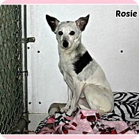 Adopt A Pet :: Rosie - New Richmond,, WI