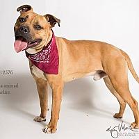 Adopt A Pet :: KENNEL 28 - Corona, CA