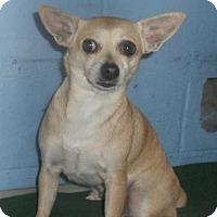 Adopt A Pet :: Narnia (Cocoa Center) - Cocoa, FL
