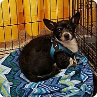 Adopt A Pet :: Denver - Fincastle, VA
