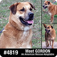 Adopt A Pet :: Gordon - Spring City, PA