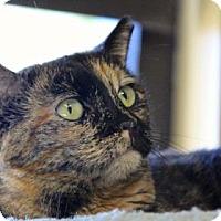 Adopt A Pet :: Olympia - Palm Springs, CA
