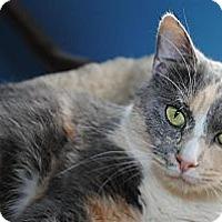 Adopt A Pet :: Juliette - Monroe, NC