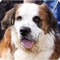 Adopt A Pet :: Tiny - Glendale, AZ