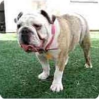 Adopt A Pet :: Jayda*adoption pending* - Gilbert, AZ