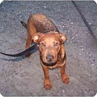 Adopt A Pet :: Chip - Cuddebackville, NY